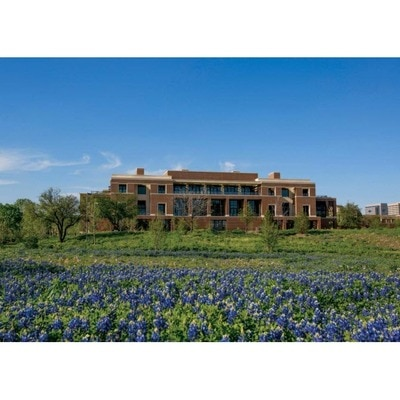 Bush Center Bluebonnets Postcard